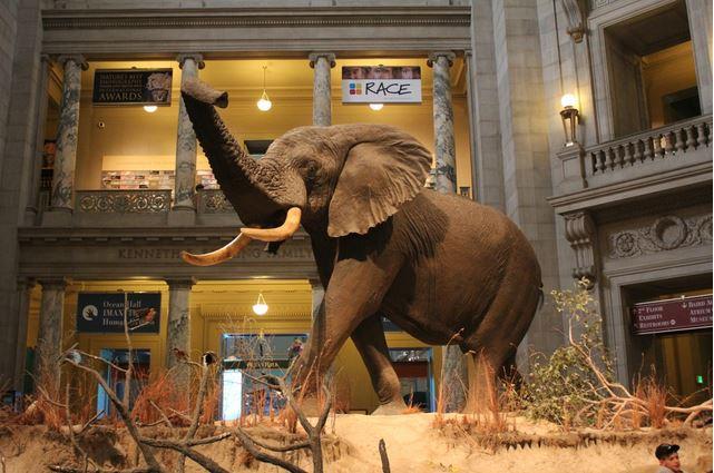 National Museum of Natural History (Ulusal Doğa Tarihi Müzesi)