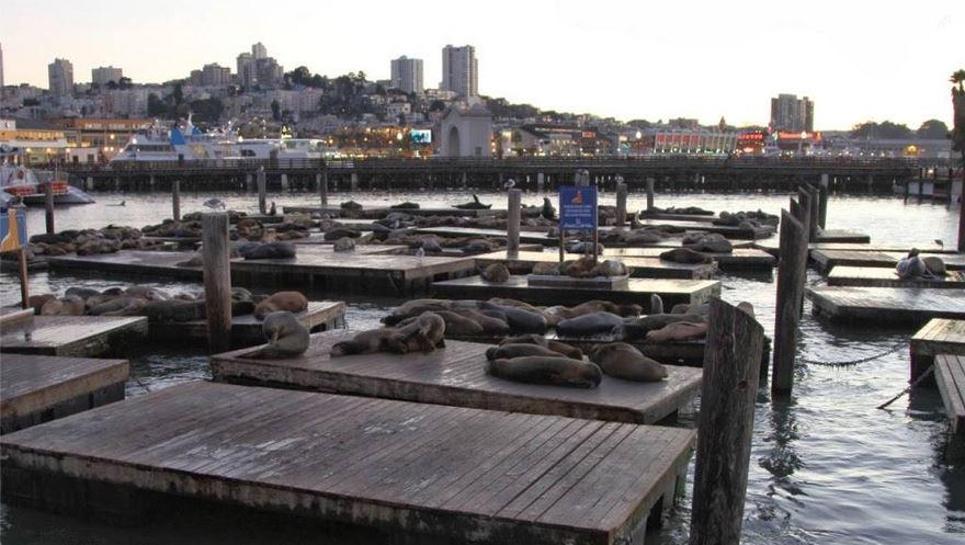 Fisherman's Wharf-Yanı Başında Deniz Aslanları