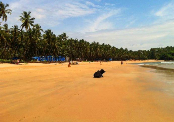 Palolem Beach-Dünyada Çok Fazla Ülkede Bu Manzaraya Şahit Olamazsınız