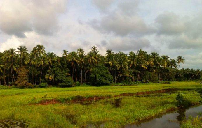 Goa'da Sıradan Şeyler Bunlar