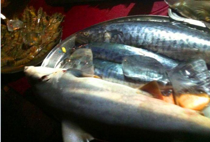Goa- Her Daim Tercimiz Balık