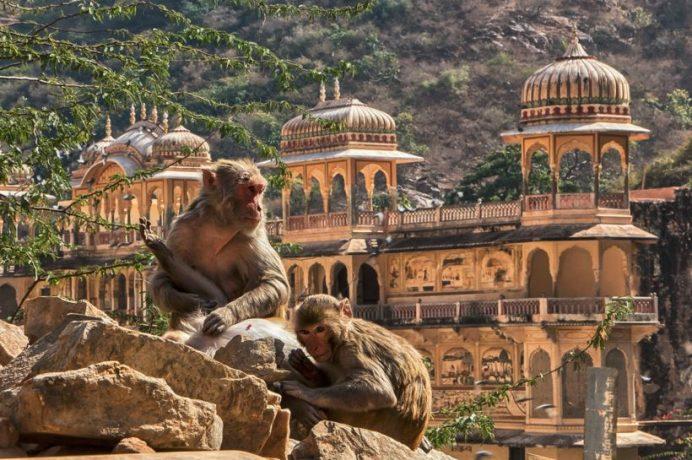 Galtaji Temple-Jaipur